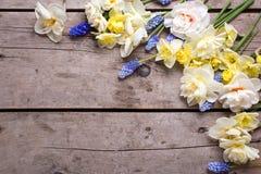从郁金香,水仙, muscaries的边界在土气开花求爱 库存照片
