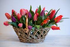郁金香 日母亲s 花束五颜六色在篮子的郁金香在白色背景 免版税库存照片