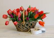 郁金香 日母亲s 花束五颜六色在篮子的郁金香在白色背景 库存照片