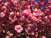 郁金香 美丽的花束郁金香 五颜六色的郁金香 郁金香在春天,五颜六色的郁金香 图库摄影