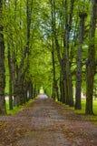郊区公园的遮荫大道 免版税库存图片