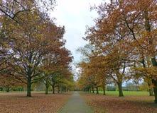 郊区公园,秋天颜色 图库摄影