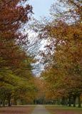 郊区公园,秋天颜色 免版税库存照片