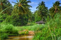 郊区椰子农场 免版税图库摄影