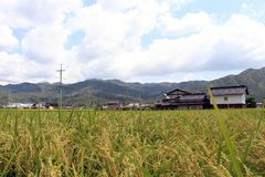 郊区生活在日本 在ricefield旁边的议院 免版税库存照片