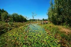 郑州黄河沼泽地公园 库存照片