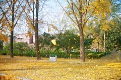 郑州people' s公园 免版税图库摄影