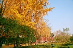郑州people' s公园 免版税库存照片