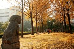 郑州people& x27; s公园 库存照片