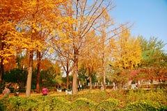 郑州people& x27; s公园 库存图片