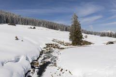 部分与冷杉和一个新多雪的风景的冻小河 免版税库存图片