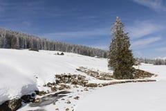 部分与冷杉和一个新多雪的风景的冻小河 免版税图库摄影