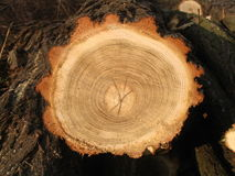 部分木头 免版税库存图片