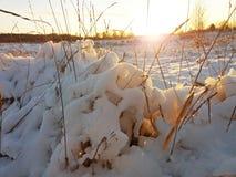 部分熔化雪和晚上太阳 库存照片