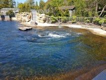 都伯林动物园 库存照片