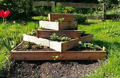 都市从事园艺用土豆 免版税图库摄影