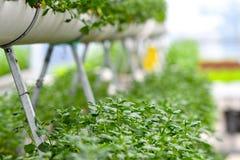 都市农业,都市种田或者都市从事园艺 免版税库存图片