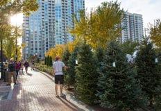 都市圣诞树全部 库存图片