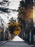 都市夏天边路在巴塞罗那 免版税库存照片