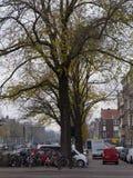 都市树在沿运河的秋天在阿姆斯特丹市 库存图片