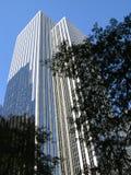 都市的密林 免版税库存照片