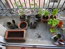 都市的庭院 库存照片