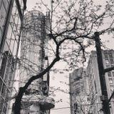 都市的森林 免版税库存图片
