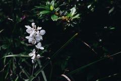 都市的植物群 免版税库存照片