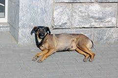 都市的狗 免版税库存照片