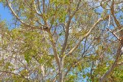 都市的结构树 库存图片