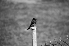 都市的鸟 免版税库存图片