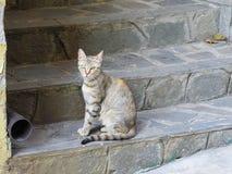都市皮包骨头的被察觉的猫坐一个石楼梯在欧洲镇在一好日子 库存照片