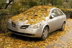都市秋天的横向 免版税库存照片