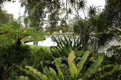 都市自然城市 库存图片
