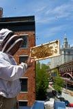 都市蜂农 图库摄影