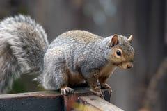 都市野生生物 免版税库存图片