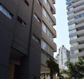都市风景,在房子之间的棕榈树, 库存图片