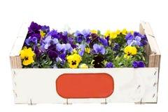 配件箱五颜六色的紫罗兰 免版税库存照片