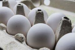 配件箱在卵黄质里面的被中断的鸡蛋鸡蛋 库存照片
