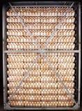 配件箱在卵黄质里面的被中断的鸡蛋鸡蛋 免版税库存照片