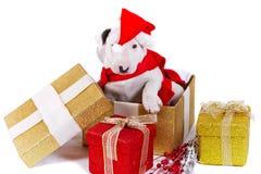配件箱布尔得利亚圣诞节礼品小狗 免版税图库摄影