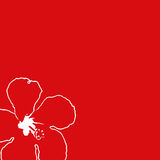 配件箱木槿红色 免版税图库摄影