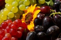 配件箱果子葡萄葡萄酒 免版税库存照片