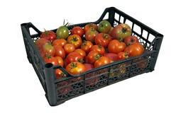 配件箱绿色红色鲜美蕃茄 免版税库存照片