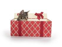 配件箱逗人喜爱的礼品小猫平纹 免版税图库摄影