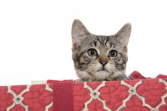 配件箱逗人喜爱的礼品小猫平纹 库存照片