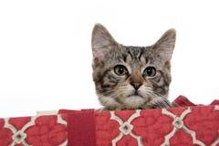 配件箱逗人喜爱的礼品小猫平纹 库存图片