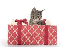 配件箱逗人喜爱的礼品小猫平纹 免版税库存照片