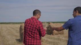 配合农业聪明的种田的概念 走两名人农夫的工作者学习领域的一个干草堆在数字 股票视频