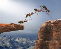 配合,队,队工作,蚂蚁 免版税库存照片